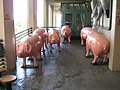 22 Pike Place Market naked unpainted pigs.jpg