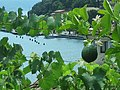25010 Limone Sul Garda, Province of Brescia, Italy - panoramio.jpg