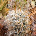 2873 cactus.jpg