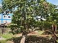 3428Poblacion, Baliuag, Bulacan 36.jpg