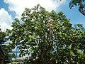 3428Poblacion, Baliuag, Bulacan 39.jpg