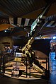 3983 - Frankreichtour 2016 - Normandie - Colleville sur Mer - Overlord Museum.jpg