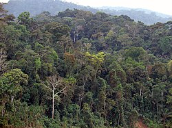 7 - Itahuania - Août 2008.JPG