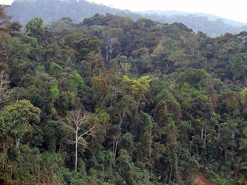 غابات الامازون 800px-7_-_Itahuania_