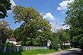 80-361-5032 Kyiv Tarnavskogo Oak SAM 0136.jpg