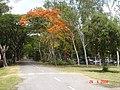 AIT - panoramio - Seksan Phonsuwan (33).jpg
