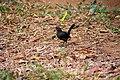 A Bird in Wilpattu National Park 05.jpg