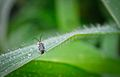 A bug life By Anis Shaikh 13.jpg
