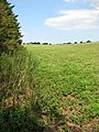 A field-woodland boundary - geograph.org.uk - 1433369.jpg