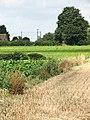 A floral border - geograph.org.uk - 910190.jpg