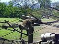 A monkey on a bridge.JPG