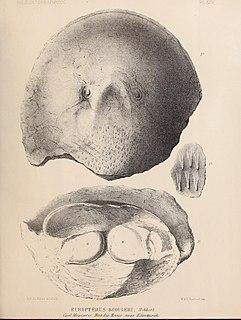 Hibbertopteridae extinct group of aquatic arthropods