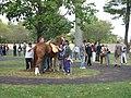 A pretty horse's butt (1697839643).jpg