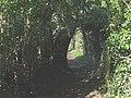 A shady arch - geograph.org.uk - 1222262.jpg