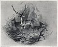 A stag standing in a mountainous landscape with stags and do Wellcome V0020834.jpg
