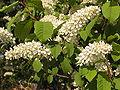 Ab plant 28.jpg