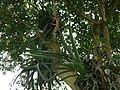Aburi garden 11.jpg