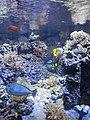 Acquario civico (Civic Aquarium) - Milan - 002.JPG