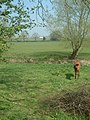 Across fields and river to Poplars Farm - geograph.org.uk - 402226.jpg