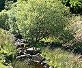 Afon Fwy - geograph.org.uk - 1331091.jpg