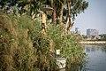 Al Bahr Al Aazam, Saqiyet Mekki, Giza, Giza Governorate, Egypt - panoramio (1).jpg