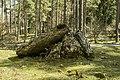 Albi trikuharria-12.jpg