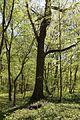 Allacher-Forst Muenchen-9.jpg