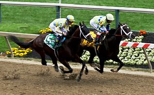 Julien Leparoux - Leparoux on Classic Empire (left) in the 2017 Preakness Stakes