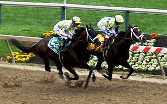 Always Dreaming - Always Dreaming (right) next to rival Classic Empire in the Preakness.