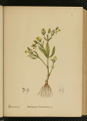 American Medicinal Plants-1-0029.png