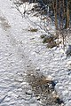 Animal activity in the snow - geograph.org.uk - 1153741.jpg