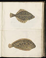 Animal drawings collected by Felix Platter, p1 - (141).jpg