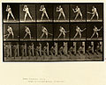 Animal locomotion. Plate 275 (Boston Public Library).jpg