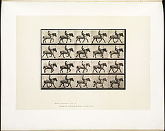 Animal locomotion. Plate 597 (Boston Public Library).jpg