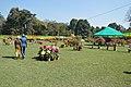 Annual Flower Show - Agri-Horticultural Society of India - Alipore - Kolkata 2013-02-10 4721.JPG