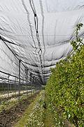 Anti-hail nets - Ferrara.jpg