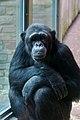 Antwerp zoo, Belgium (1400234018).jpg