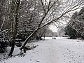 Approaching Coe Fen in the snow - geograph.org.uk - 2203749.jpg
