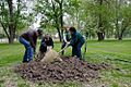 April 12, 2012 EPA helps City of Parkville, MO replace trees lost in last years flooding along the Missouri River (7129492423).jpg