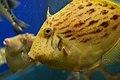Aquarium, Kyoto University, Shirahama, Japan (476710440).jpg
