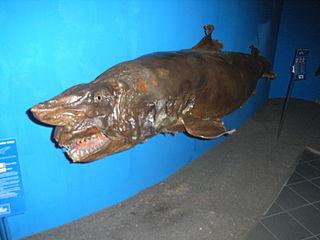 Aquarium Sf