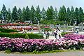 Aramaki rose park08s2320.jpg