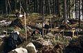 Archaeological excavation, Lemnäset, Lesjön, Ångermanland, Sweden (16748076328).jpg