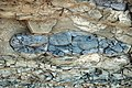 Argillaceous beds (Tymochtee Dolomite, Upper Silurian; South Bass Island, Lake Erie, Ohio, USA) 3 (48628357507).jpg