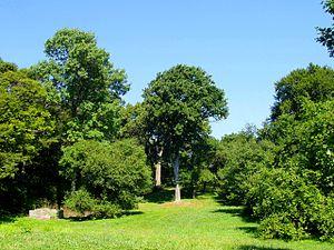 Arnold Arboretum - General view of Arnold Arboretum