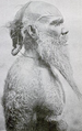Arrernte man Australoid body hair.png
