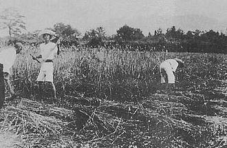 Atarashiki-mura - Atarashiki-mura in 1919