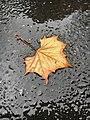 Autumn Onset.jpg