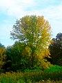 Autumn in Warner Park - panoramio (2).jpg