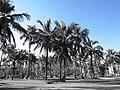 Av. Dr. Artur Costa Filho, 322-538 - Sumaré, Caraguatatuba - SP, Brazil - panoramio.jpg
